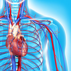 New EW Education Course: Be Smart About Your Heart.  Authored by Tina Schmidt-McNulty RN.